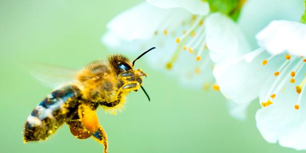 EPI-abeilles