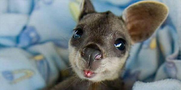bebe-kangourou