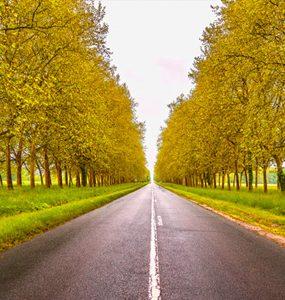 Route droite entre des arbres