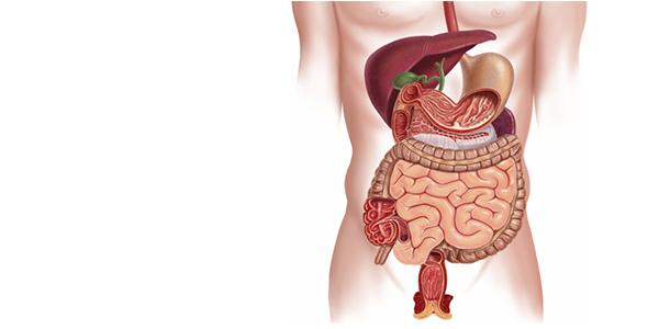digestion epi sucre