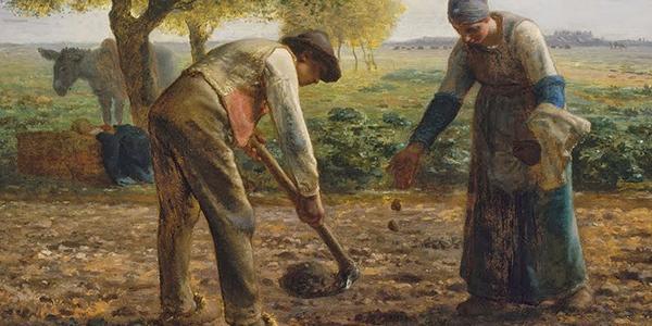 epi agriculture millet