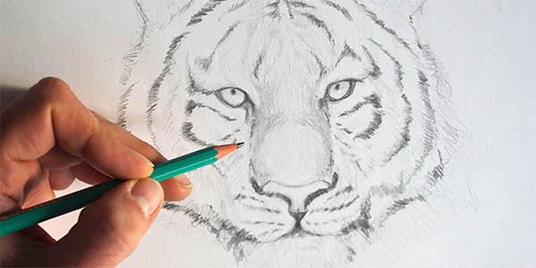 epi explorateurs dessiner tigre carnet voyage