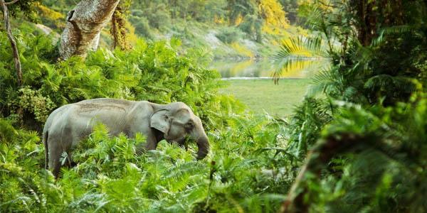 jungle-ambiance