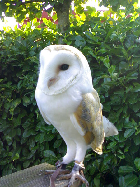 Px Tyto Alba Barnowl Kerkuil also Gustave Kervern besides Px Noisiel C Cole Du Tr C A Sor together with Infoman also Adianez Hernandez. on ex les